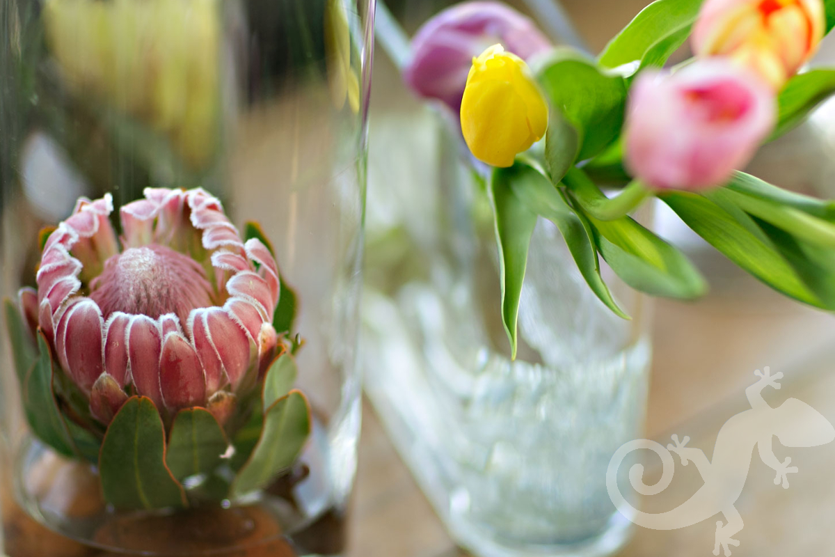 Engagement Party, she said yes, tulips, protea